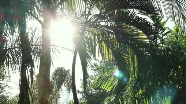 Krásný výhled na svěží zelené stromy se sluncem zářícím na jaře, přírodní zázemí.