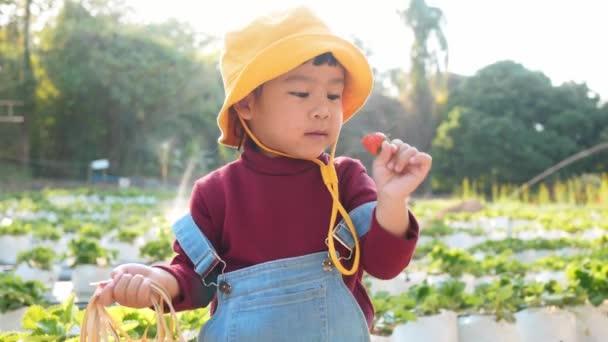 Roztomilé dítě dívka těší jíst jahody na ekologické farmě v den slunečního svitu. Outdoorové aktivity pro děti na dovolené s rodinou.