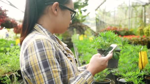 Asian young female gardener using smartphone to working in greenhouse. Concepts of using technology in agricultural.