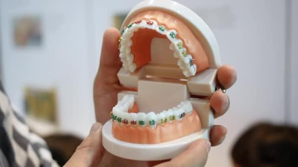 Zubař drží chrup v rukou a ukazuje, jak je systém rovnátek na zubech uspořádán. Koncept protetické stomatologie.