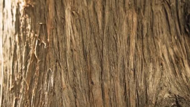 Laugen auf trockenem Holz. getrockneter Baumstamm.