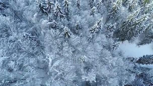 Bílá krajina v zimě