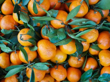 tangerines with leaves close-up. Tangerine farming farm. A lot of mandarin with leaves. View from above.