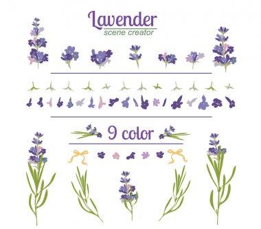 Lavender flower on white background. Colorful vintage vector illustration