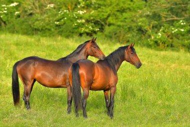 Herd of horses in the pasture.