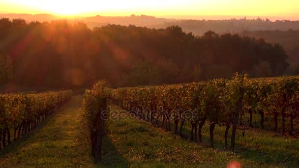 Bordeaux vinice na podzim, sunrise, časová prodleva