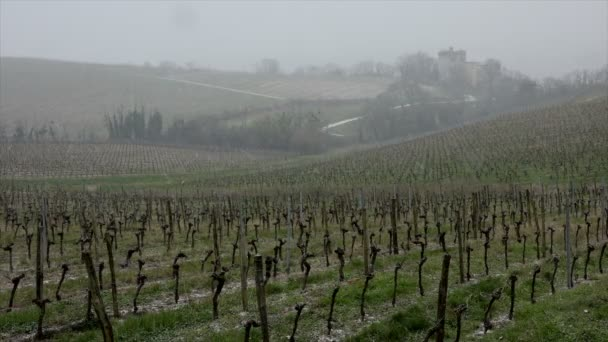 Zasněžené vinice bordeaux vinice