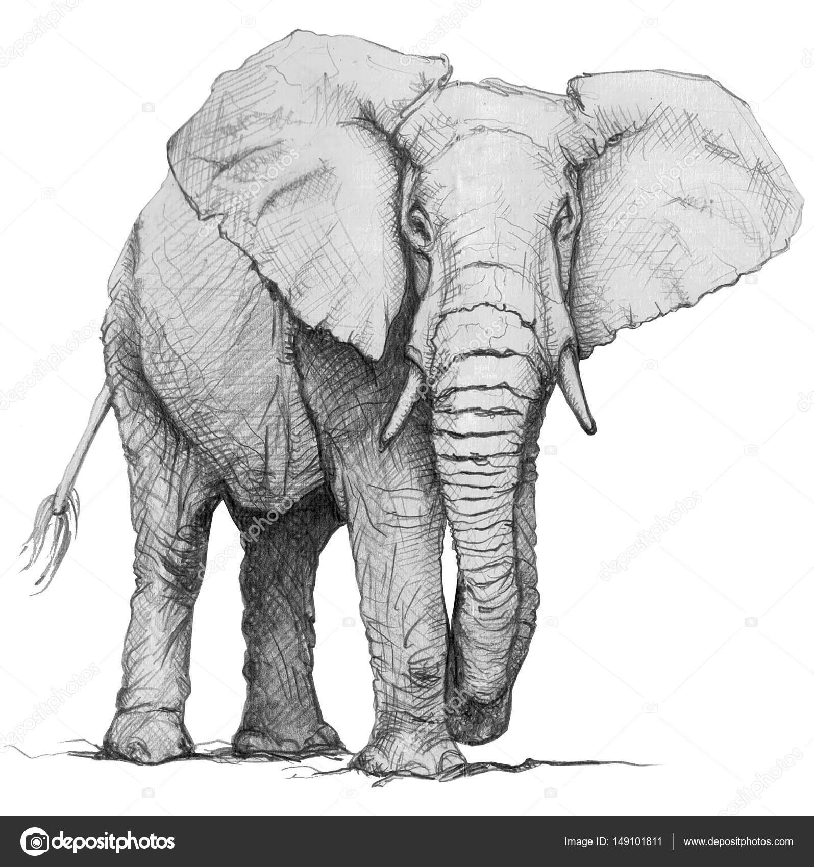 Elefante dibujado de la mano. Ilustración lápiz — Fotos de Stock ...
