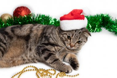 a striped cat in a Santa Claus hat lies with Christmas toys and tinsel on a white background. New year 2020