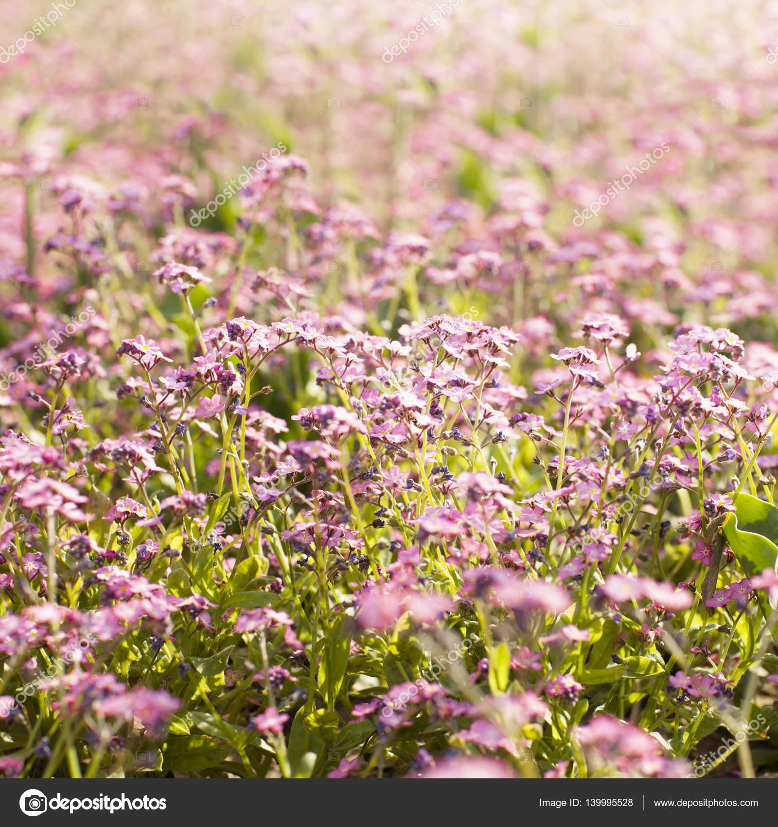 Pink Flowers In Field Stock Photo Luminastock 139995528