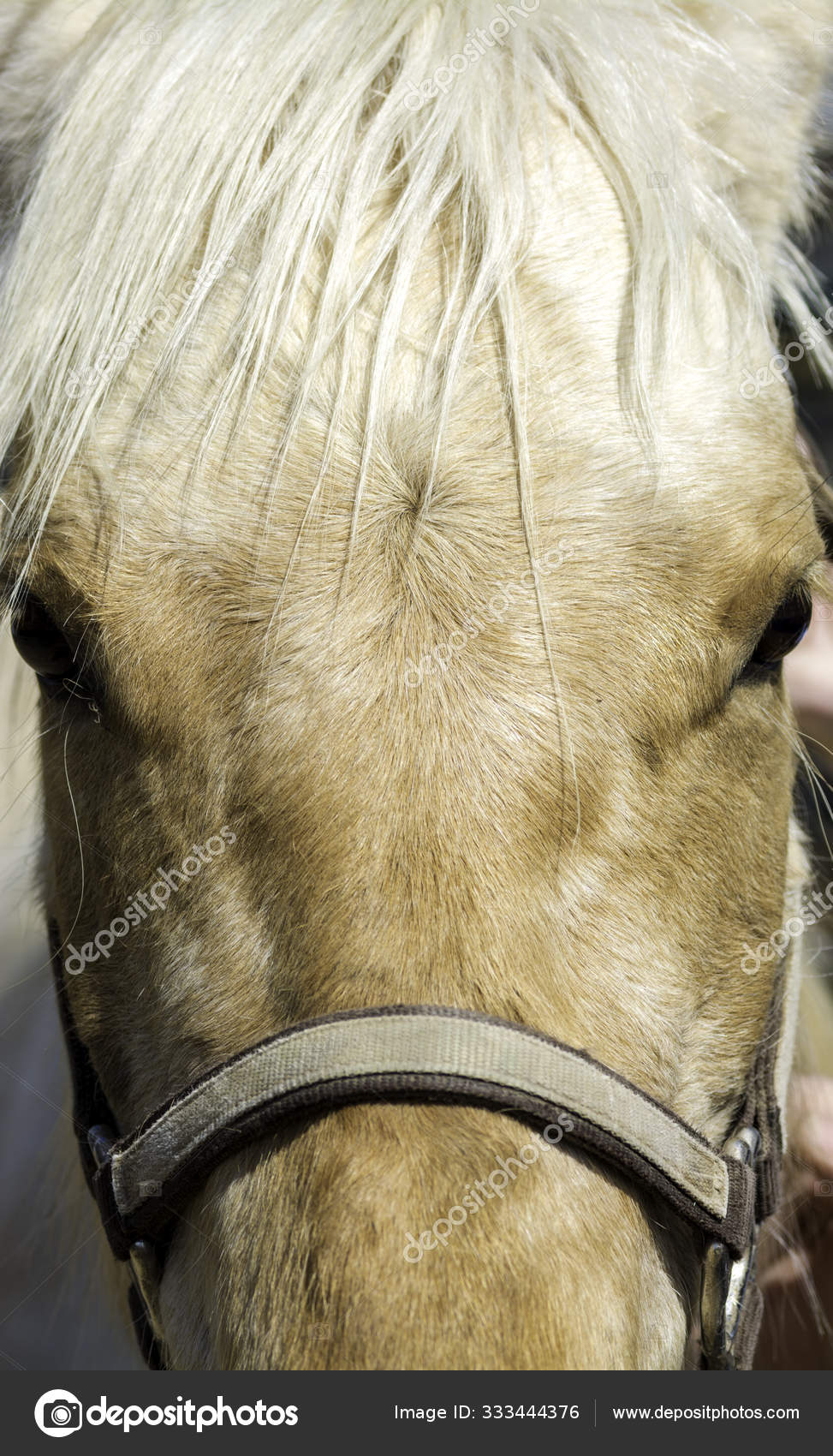 Beautiful White Horse Face With Eyes Stock Photo C Knowlesgallery 333444376