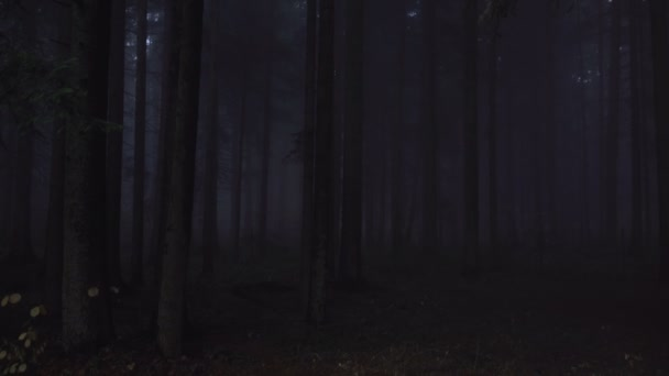 Deep dark woods in the night. Supernatural, spooky, mysterious pine forest with mist in the night