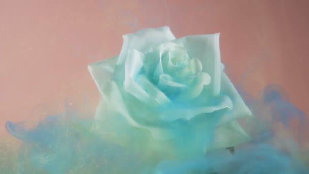 Szoros pillantást örvénylő kék mágikus por borító fehér rózsa rózsaszín háttér