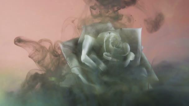 Černý vířící mrak pokrývající jiskřivě bílou růži pod vodou. Koncepce znečištění nebo onemocnění