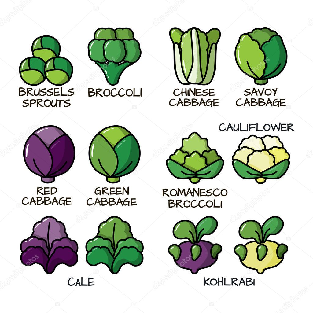 Set of colored icons with different varieties of cabbage. Illustration with the vegetables for design food products, advertising products, environmental articles, dietary recommendations.