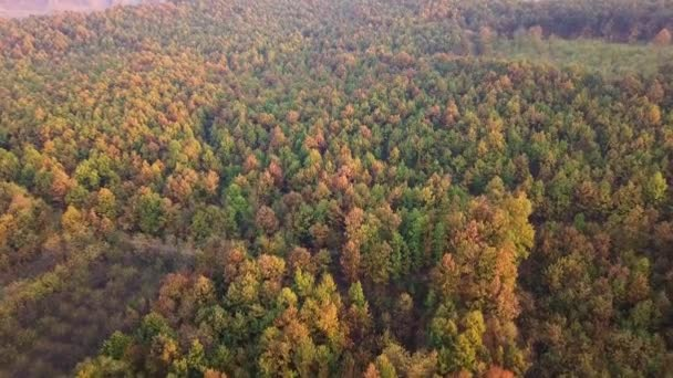 Aerial shot of the beautiful golden and green forest in autumn at sunset