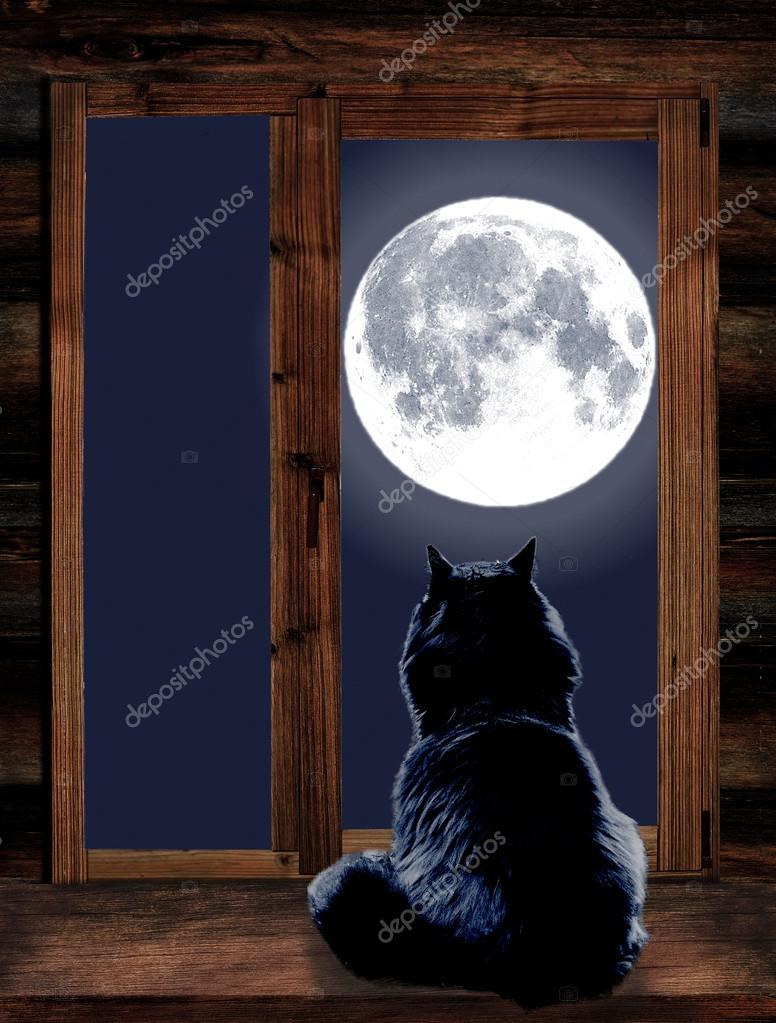 Cat looks through the window at the full moon
