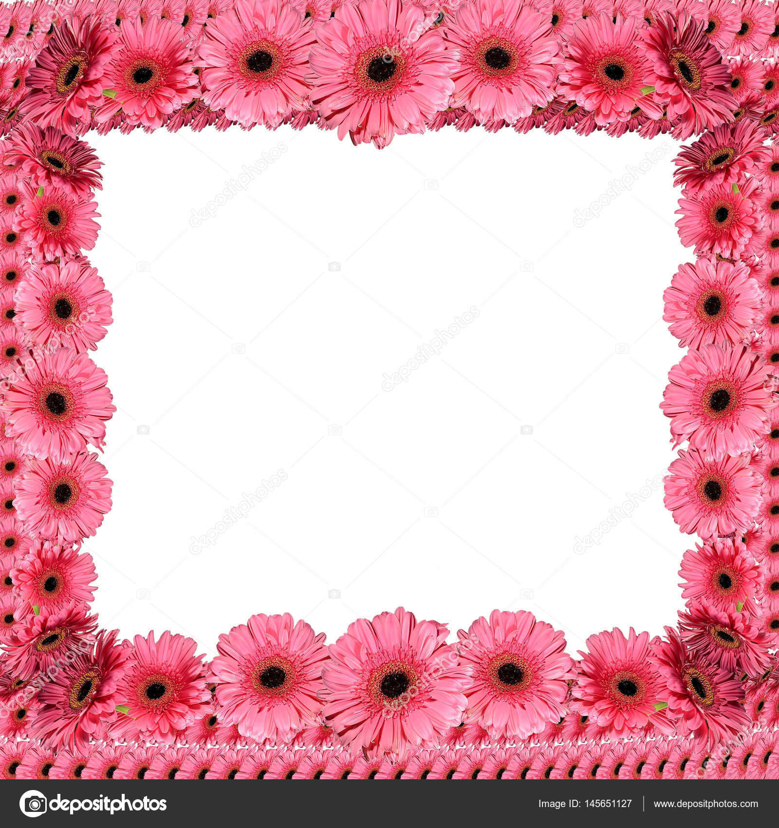 Pink floral frame from gerberas — Stock Photo © Ruvo233 #145651127