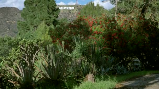 Famous landmark Hollywood Sign in Los Angeles, California thru green plants unique view LOS ANGELES USA 23.12.2019