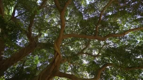 Beszűrődik fény ragyog a fa és a dzsungel erdő, Kína ága