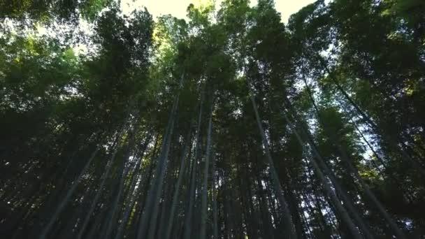 Bambushain, Bambuswald in Arashiyama in Kyoto, Japan in 4k