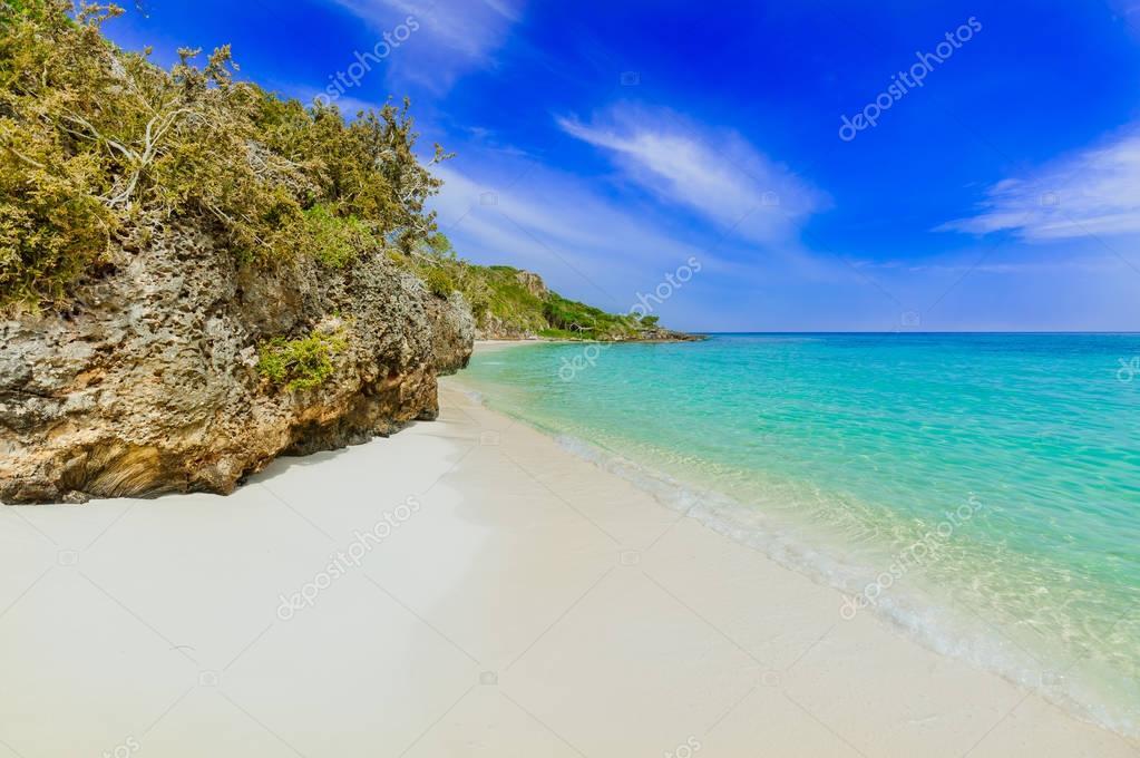 日当たりの良い夏の日に熱帯白い...