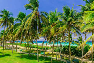 amazing inviting nice tropical palm tree garden with turquoise tranquil ocean in background