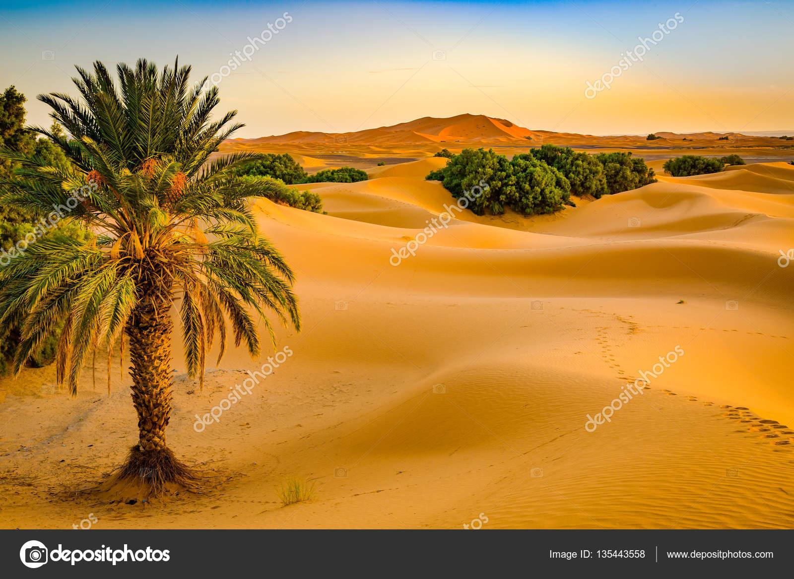 Παλάμη της ερήμου