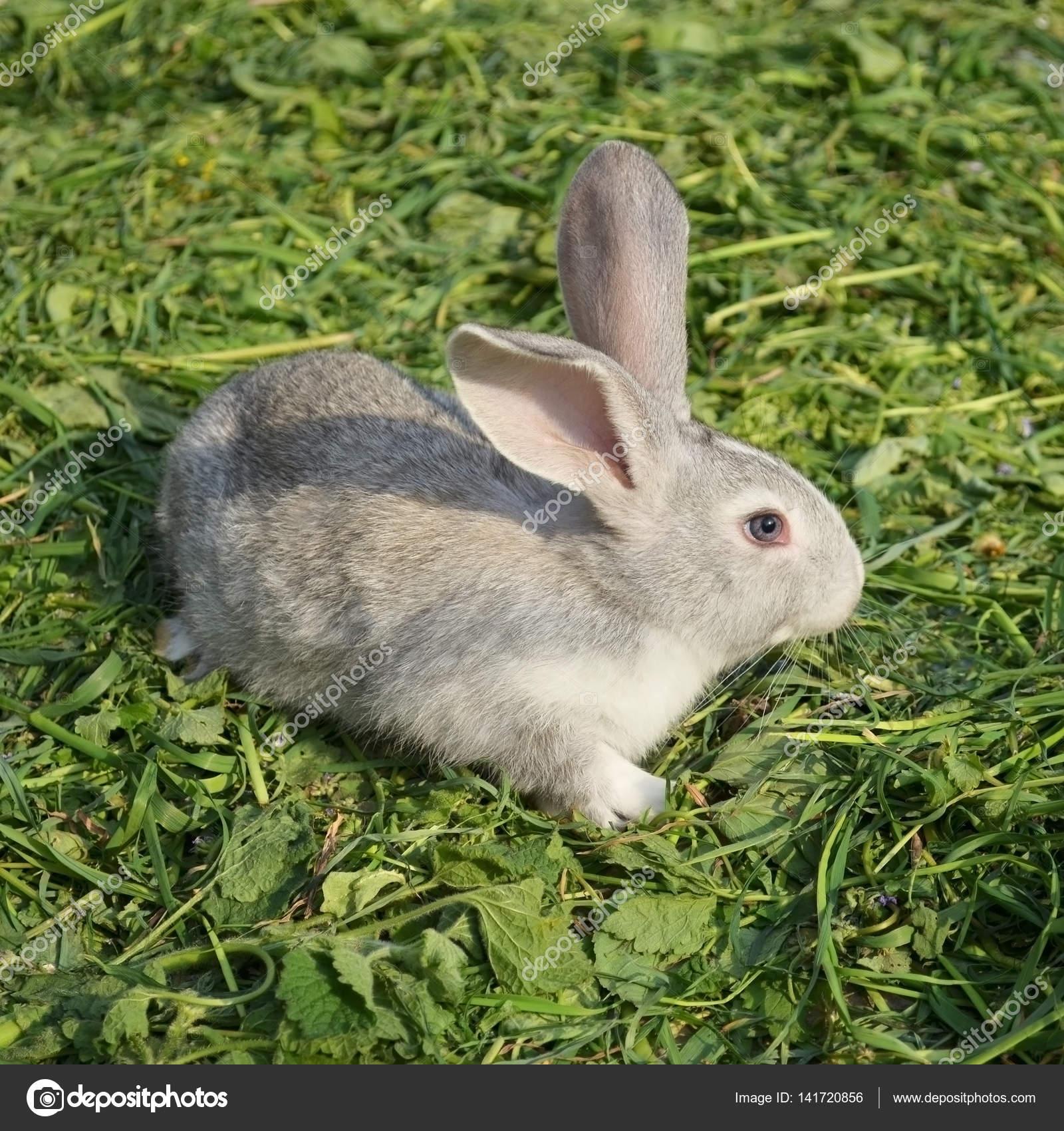 Junge Kaninchen Im Garten Stockfoto On The Rhythm 141720856