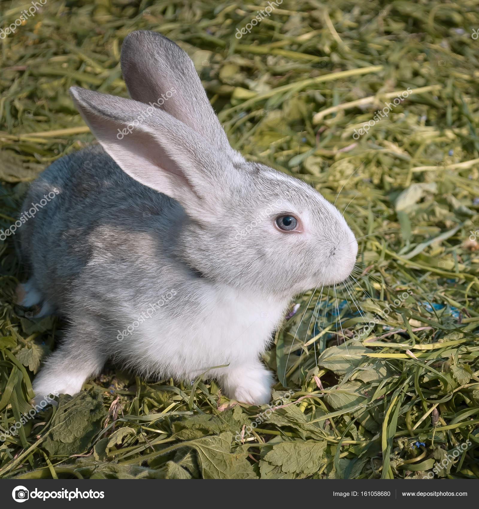 Junge Kaninchen Im Garten Stockfoto On The Rhythm 161058680