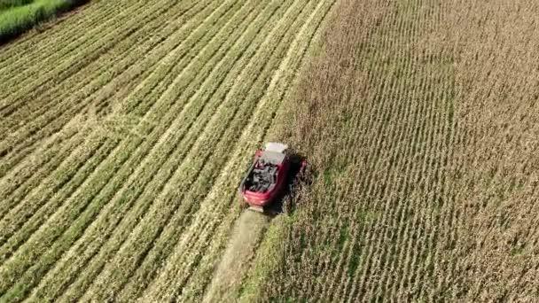 Kukoricamezőn működő betakarító gép. Agrárüzlet. Nagy táj.