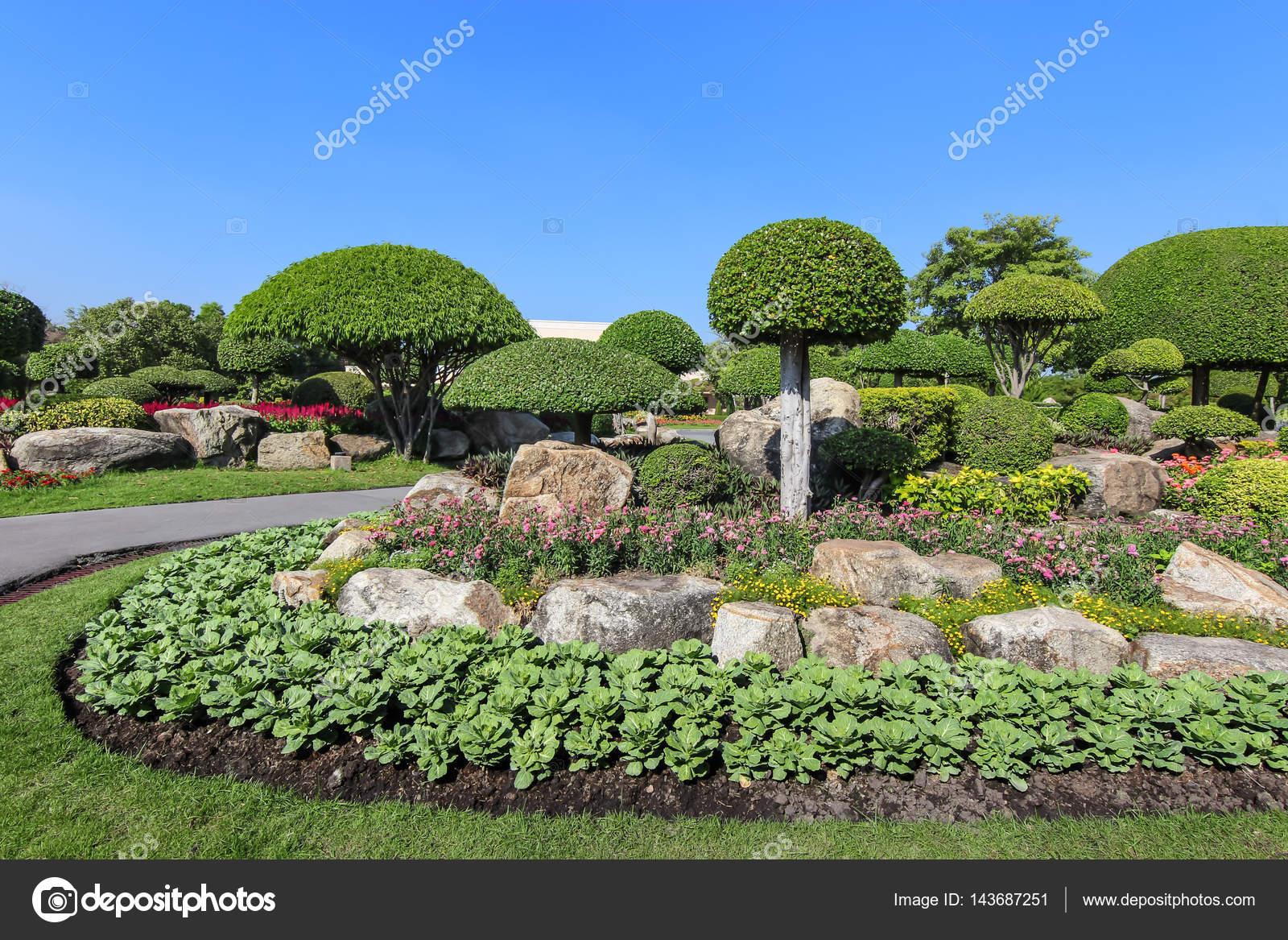 Schöne Zwerg-Baum im Garten — Stockfoto © maicyber #143687251