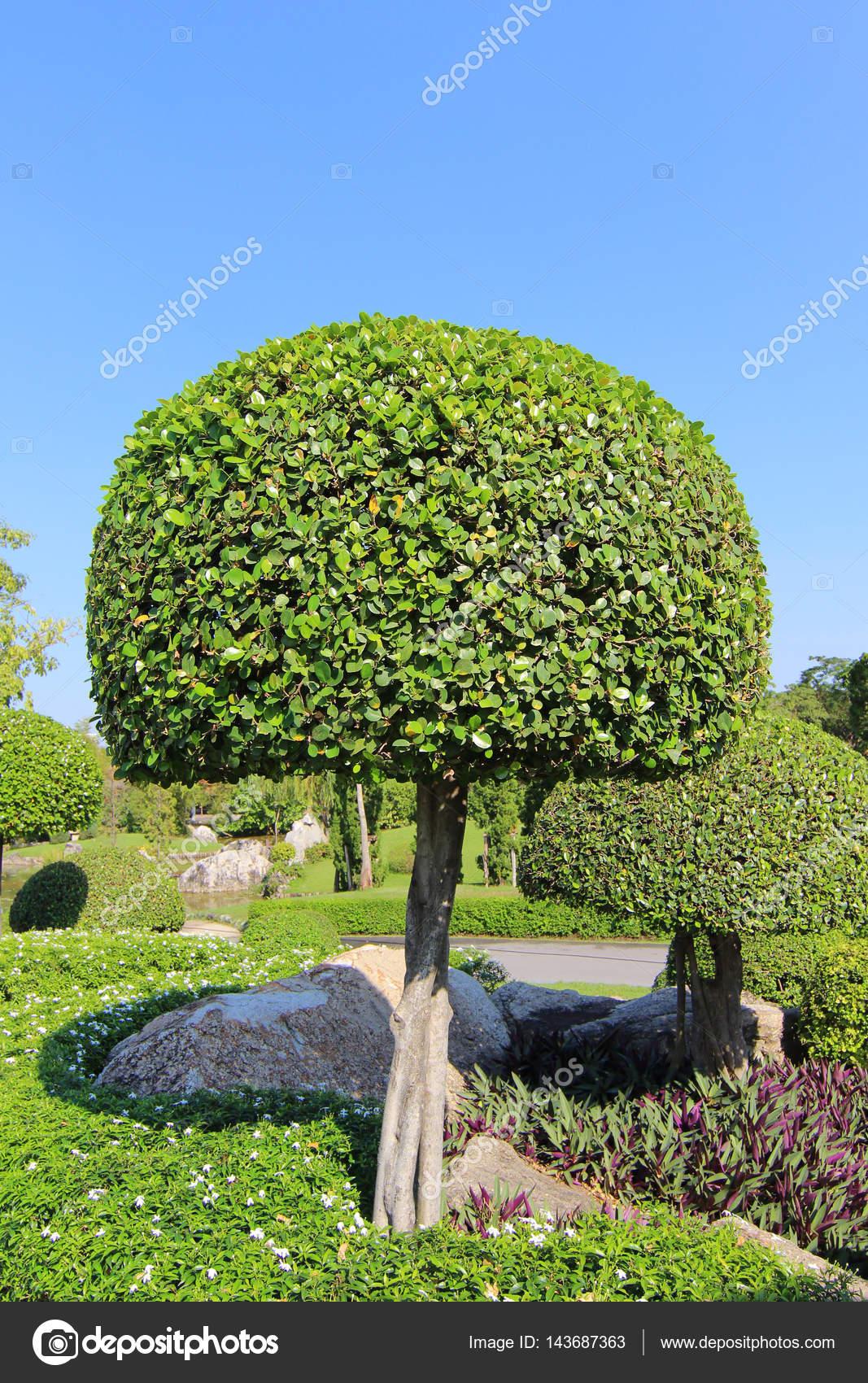 Schöne Zwerg-Baum im Garten — Stockfoto © maicyber #143687363