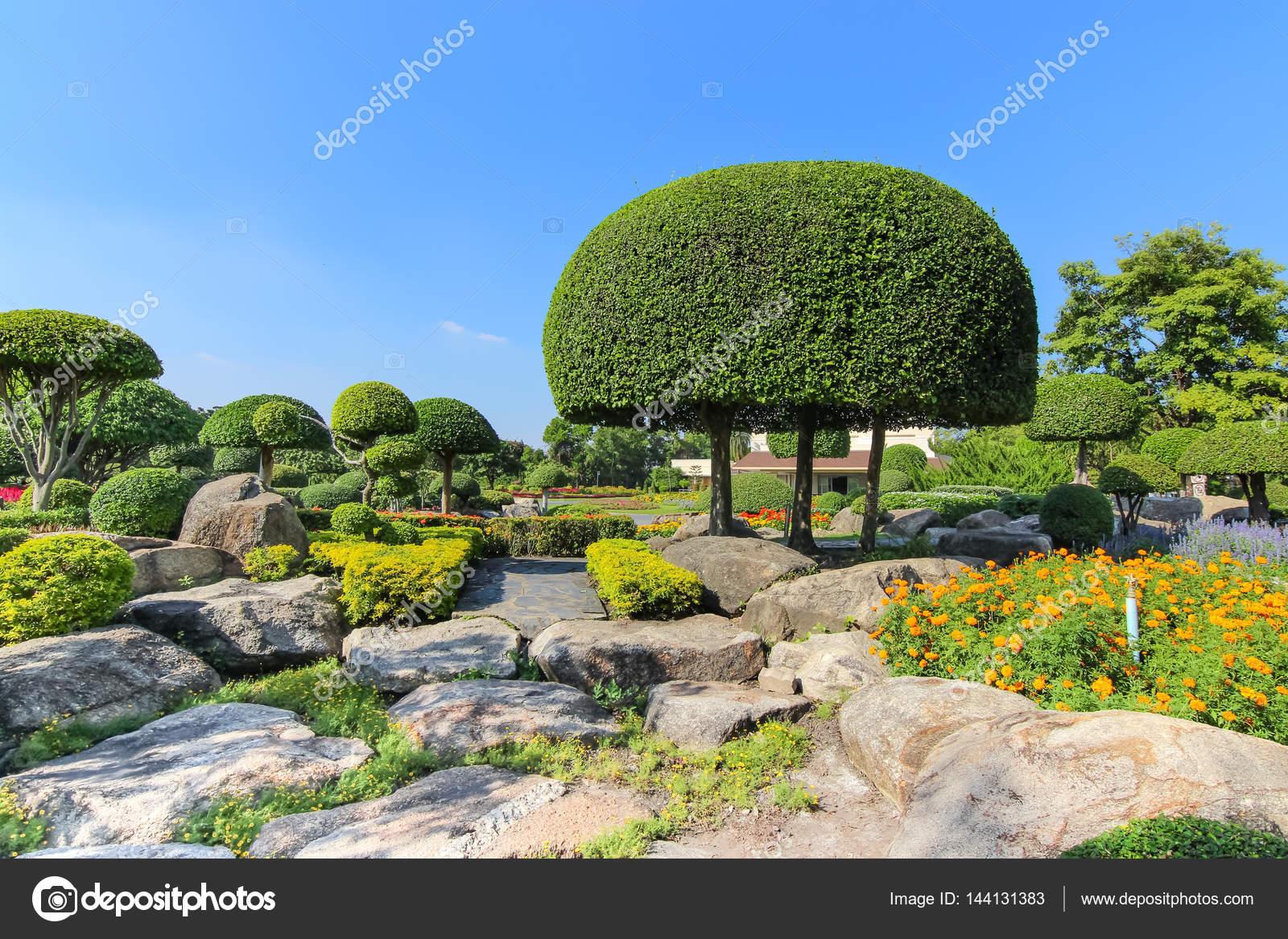 Schöne Zwerg-Baum im Garten — Stockfoto © maicyber #144131383
