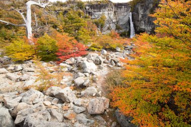 Autumn colors of vegetation around the Chorrillo del Salto waterfall, National Park de los Glaciares, Argentina