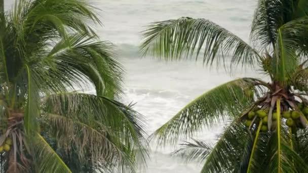 Trópusi tengerparti pálmafák