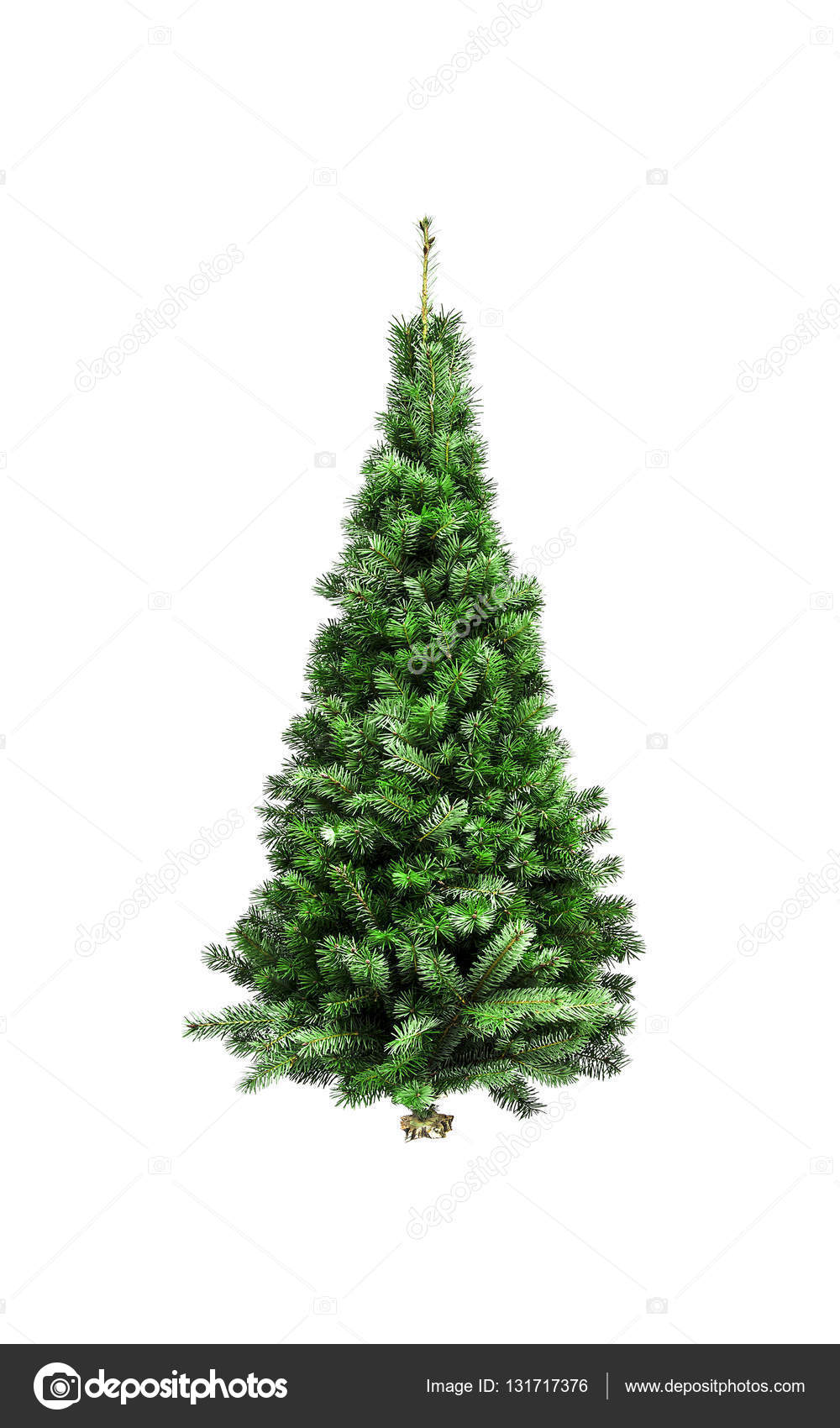 Christmas tree without ornaments isolated on a white background  Photo by  believeinme