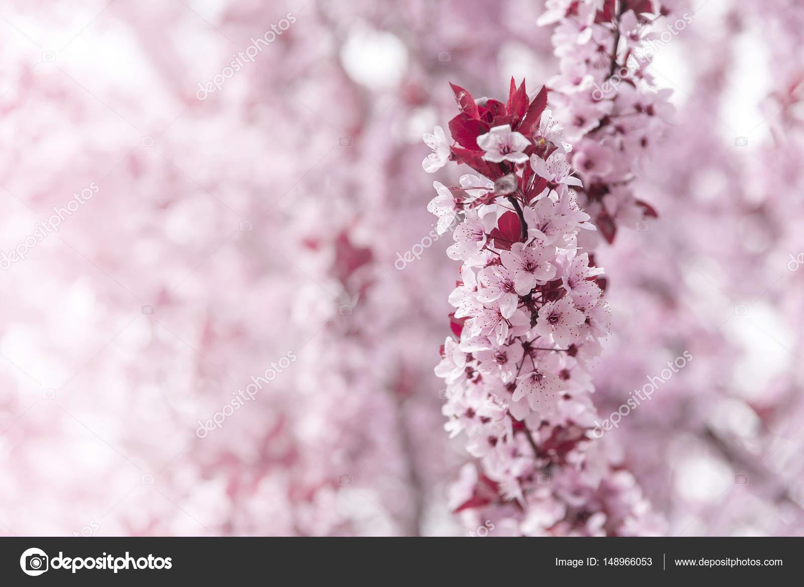 träd med rosa blommor