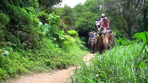 jízda na slona