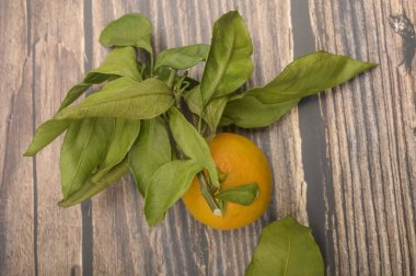 One yellow tangerine on a twig with green leaves on a wooden background. Autumn harvest. Modern agriculture. For a sweet treat.