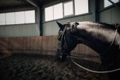 Fotografie Black horse standing in the dark manege