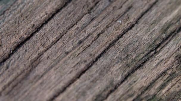 Mravenci pilně přecházejí přes starý dřevěný povrch