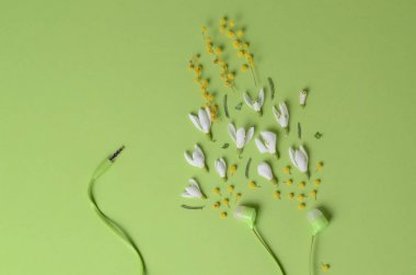 Spring flowers, snowdrops and mimosa as sound from headphones on a green background.