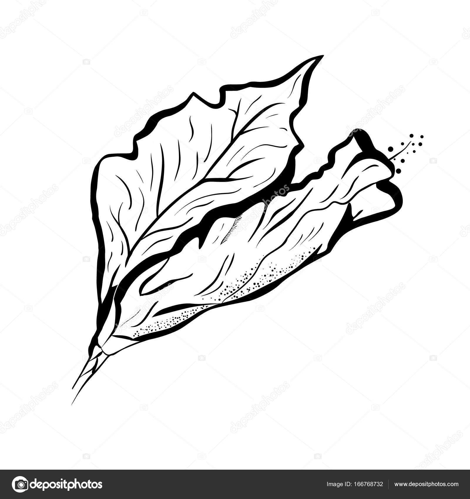 Fleur Dhibiscus Dans Le Style De Tatouage Noir Et Blanc