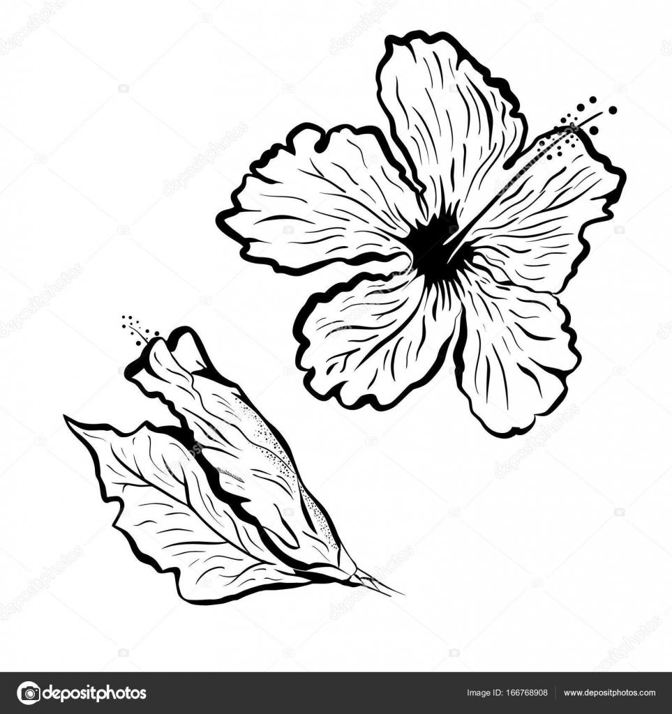 Vector Flor Tattoo Flor De Hibiscus En Estilo De Tatuaje Blanco - Flor-hawaiana-tattoo