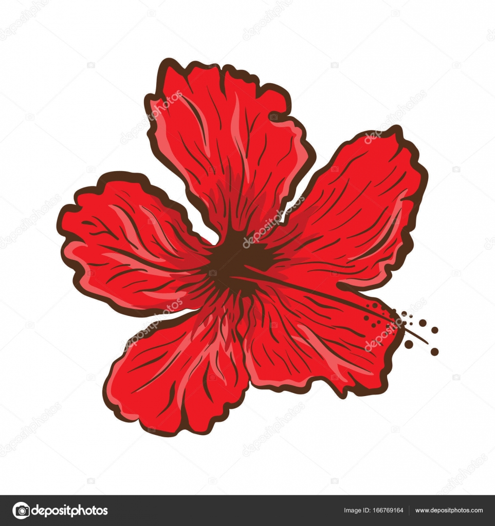 Hibiscus Flower In Tattoo Style Graphic Tropical Flower Stock
