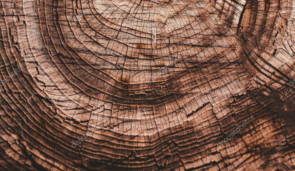 wooden annual rings