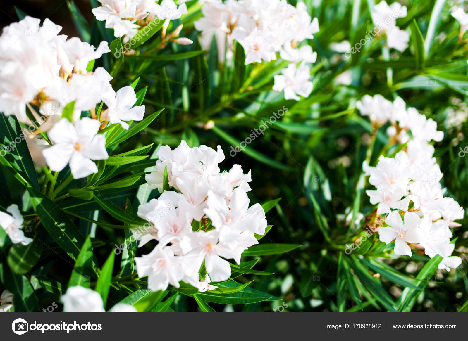 Beautiful Grate White Flowers Green Leaves Outdoor Bunch Flowers