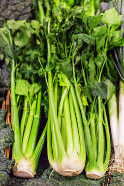 Green Organic Celery on market stall at organic farmers grocery store.