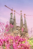 View of blossom trees at Sagrada Familia in spring time